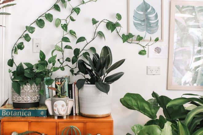 house plants and vocs